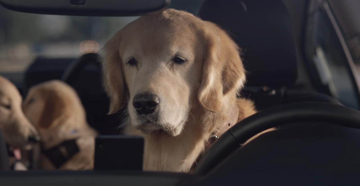 Subaru считает, что реклама, ориентированная на собак, была значительной частью ее успеха